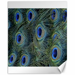 Peacock Feathers Blue Bird Nature Canvas 16  X 20