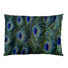 Peacock Feathers Blue Bird Nature Pillow Case
