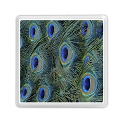 Peacock Feathers Blue Bird Nature Memory Card Reader (square)  by Nexatart