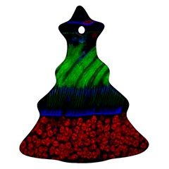 Cells Rainbow Ornament (christmas Tree)  by Mariart