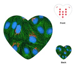 Fluorescence Microscopy Green Blue Playing Cards (heart)  by Mariart