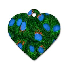 Fluorescence Microscopy Green Blue Dog Tag Heart (one Side) by Mariart