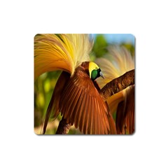 Birds Paradise Cendrawasih Square Magnet by Mariart