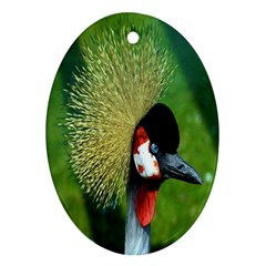 Bird Hairstyle Animals Sexy Beauty Ornament (oval) by Mariart