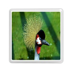 Bird Hairstyle Animals Sexy Beauty Memory Card Reader (square)  by Mariart