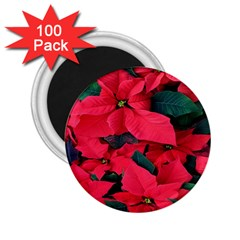 Red Poinsettia Flower 2 25  Magnets (100 Pack)  by Mariart