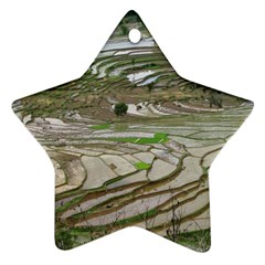 Rice Fields Terraced Terrace Star Ornament (two Sides)
