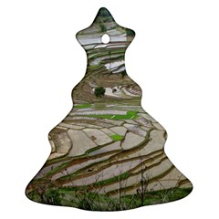 Rice Fields Terraced Terrace Ornament (christmas Tree)  by Nexatart