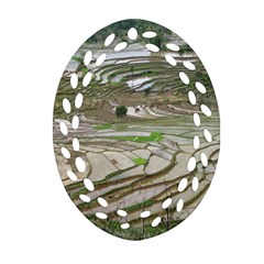 Rice Fields Terraced Terrace Oval Filigree Ornament (two Sides) by Nexatart