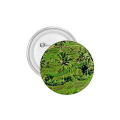 Greenery Paddy Fields Rice Crops 1 75  Buttons