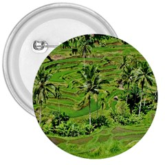 Greenery Paddy Fields Rice Crops 3  Buttons