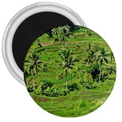Greenery Paddy Fields Rice Crops 3  Magnets