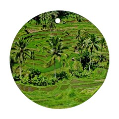 Greenery Paddy Fields Rice Crops Ornament (Round)