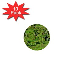 Greenery Paddy Fields Rice Crops 1  Mini Buttons (10 Pack)