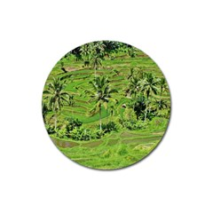 Greenery Paddy Fields Rice Crops Magnet 3  (round)
