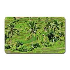 Greenery Paddy Fields Rice Crops Magnet (rectangular) by Nexatart
