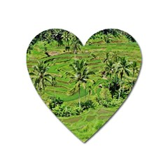 Greenery Paddy Fields Rice Crops Heart Magnet