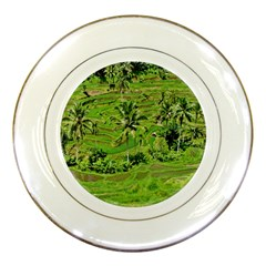 Greenery Paddy Fields Rice Crops Porcelain Plates by Nexatart