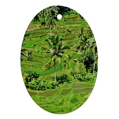 Greenery Paddy Fields Rice Crops Oval Ornament (two Sides) by Nexatart