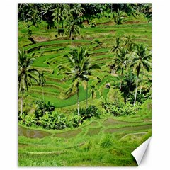 Greenery Paddy Fields Rice Crops Canvas 16  X 20