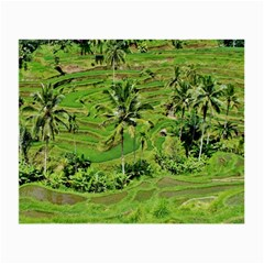 Greenery Paddy Fields Rice Crops Small Glasses Cloth (2 Side) by Nexatart