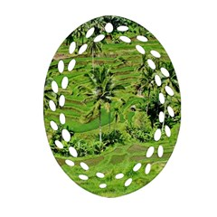 Greenery Paddy Fields Rice Crops Oval Filigree Ornament (two Sides) by Nexatart