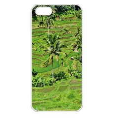 Greenery Paddy Fields Rice Crops Apple Iphone 5 Seamless Case (white)