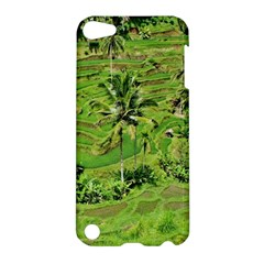 Greenery Paddy Fields Rice Crops Apple Ipod Touch 5 Hardshell Case by Nexatart