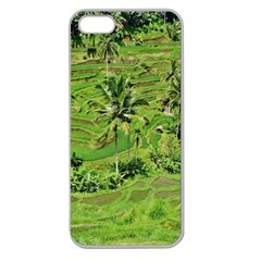 Greenery Paddy Fields Rice Crops Apple Seamless iPhone 5 Case (Clear)