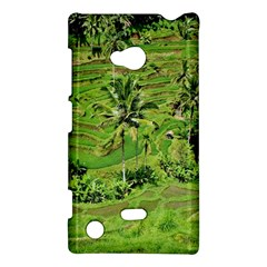 Greenery Paddy Fields Rice Crops Nokia Lumia 720