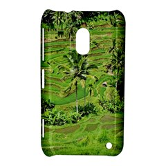 Greenery Paddy Fields Rice Crops Nokia Lumia 620 by Nexatart