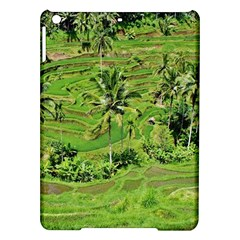 Greenery Paddy Fields Rice Crops Ipad Air Hardshell Cases by Nexatart