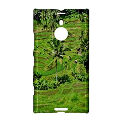 Greenery Paddy Fields Rice Crops Nokia Lumia 1520 by Nexatart