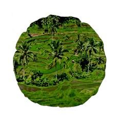 Greenery Paddy Fields Rice Crops Standard 15  Premium Flano Round Cushions