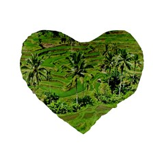 Greenery Paddy Fields Rice Crops Standard 16  Premium Flano Heart Shape Cushions