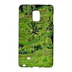Greenery Paddy Fields Rice Crops Galaxy Note Edge