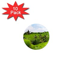 Bali Rice Terraces Landscape Rice 1  Mini Magnet (10 Pack)