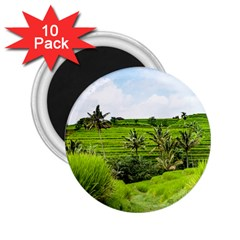 Bali Rice Terraces Landscape Rice 2 25  Magnets (10 Pack)  by Nexatart