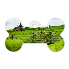 Bali Rice Terraces Landscape Rice Dog Tag Bone (two Sides) by Nexatart