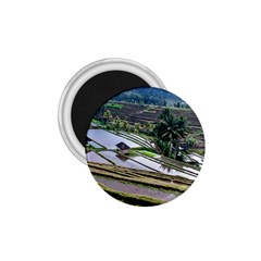 Rice Terrace Rice Fields 1 75  Magnets
