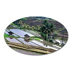 Rice Terrace Rice Fields Oval Magnet by Nexatart