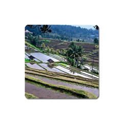 Rice Terrace Rice Fields Square Magnet by Nexatart