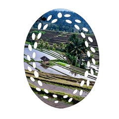 Rice Terrace Rice Fields Ornament (oval Filigree) by Nexatart