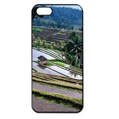 Rice Terrace Rice Fields Apple Iphone 5 Seamless Case (black) by Nexatart