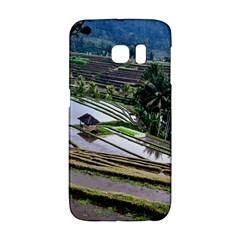 Rice Terrace Rice Fields Galaxy S6 Edge