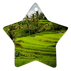 Rice Terrace Terraces Ornament (star)