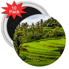Rice Terrace Terraces 3  Magnets (10 Pack)