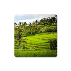 Rice Terrace Terraces Square Magnet by Nexatart