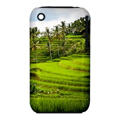 Rice Terrace Terraces Iphone 3s/3gs by Nexatart