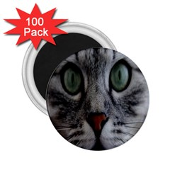 Cat Face Eyes Gray Fluffy Cute Animals 2 25  Magnets (100 Pack)  by Mariart